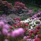 Conca Rododendri PR (3)
